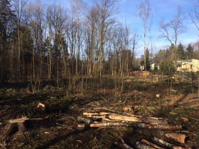 gefäälte Bäume Schulwald